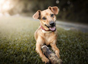 Pet friendly - Animaux permis